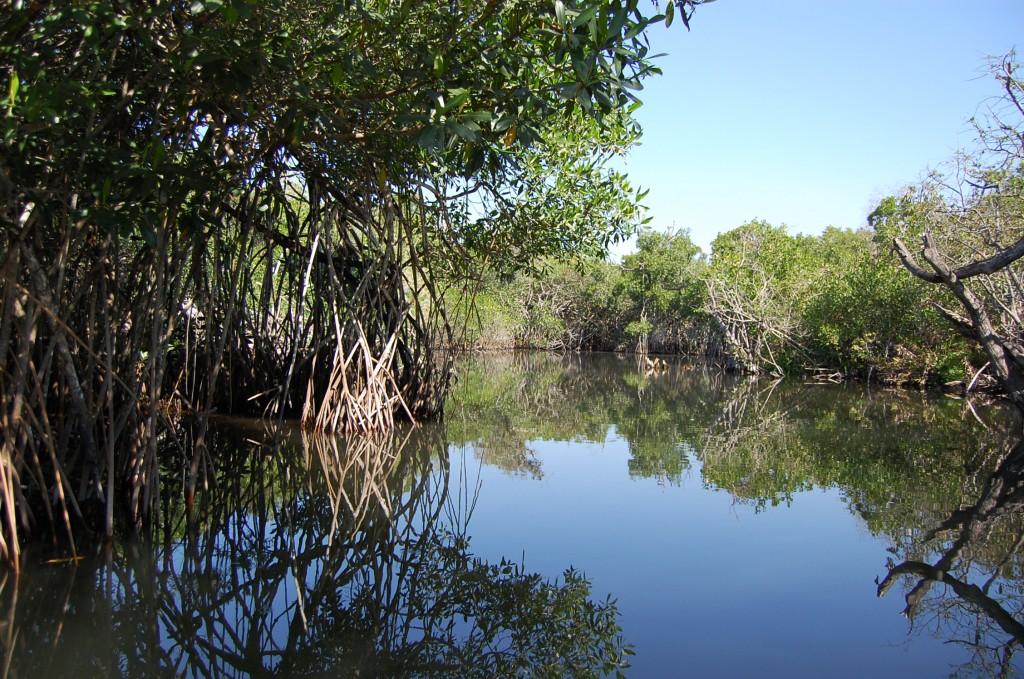 Cordova - Mangroves