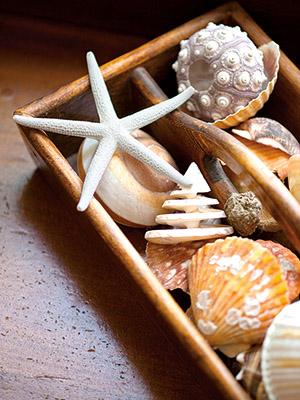 shells in box